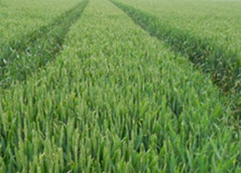 Agronomy crop services in Suffolk & Essex - precision farming services